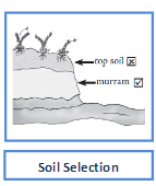 marram soil